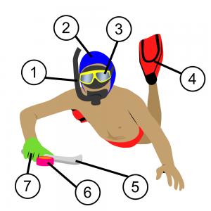 1. tuba et protège-bouche 2. bonnet et protège-oreilles 3. masque 4. palmes 5. crosse 6. palet 7. gant